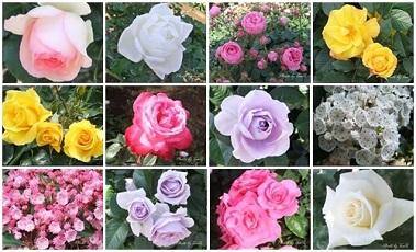 都内で薔薇と言えば「神代植物公園」