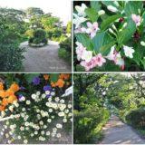 玉川上水第二公園(桜上水~上北沢)を歩いてみた♪