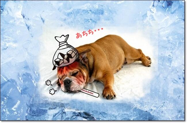 今年は大活躍!熱中症対策の必需品、保冷剤!