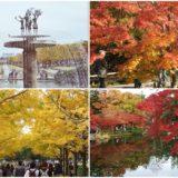 「国営昭和記念公園」の紅葉&黄葉スポット